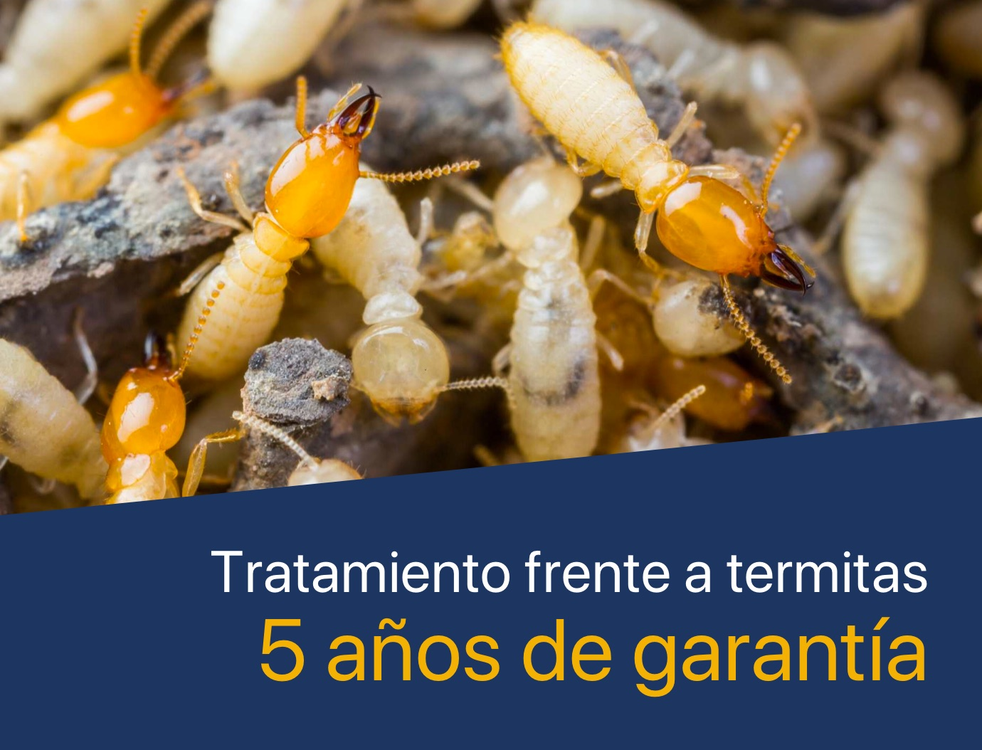 Tratamiento de termitas. 5 años de garantía
